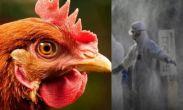 რუსეთში ფრინველის გრიპის H5N8-ის პირველი შემთხვევა დადასტურდა