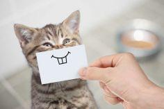 აღმოჩნდა რომ კატების მიმიკებისა და ემოციების გაგება ადამიანებს არ შეუძლიათ
